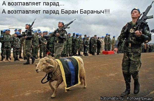 Котоматрица: А возглавляет парад... А возглавляет парад Баран Бараныч!!!