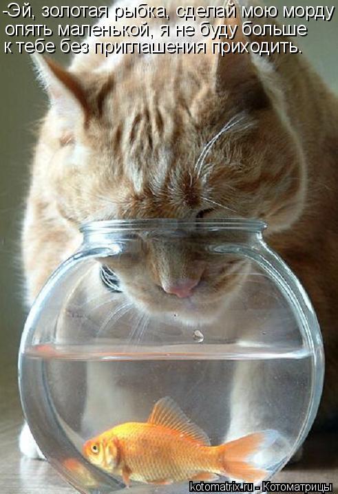 Котоматрица: -Эй, золотая рыбка, сделай мою морду опять маленькой, я не буду больше  к тебе без приглашения приходить.