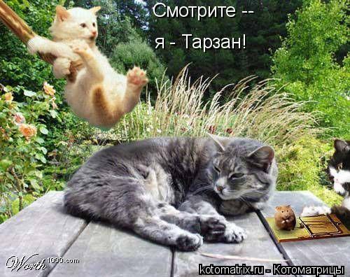 Котоматрица: я - Тарзан! Смотрите --