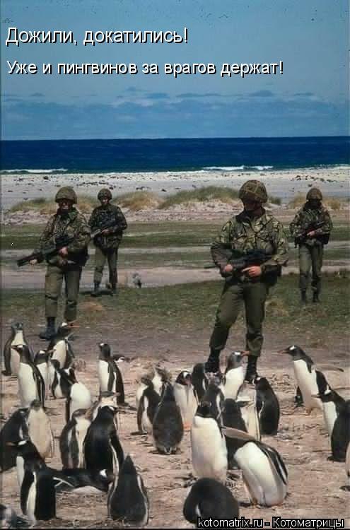 Котоматрица: Дожили, докатились! Уже и пингвинов за врагов держат!
