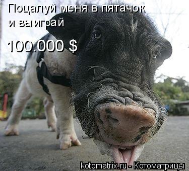 Котоматрица: Поцалуй меня в пятачок 100.000 $ и выиграй