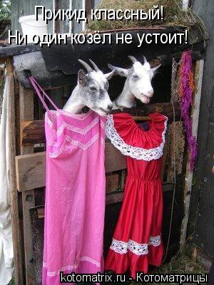 Котоматрица: Ни один козёл не устоит! Прикид классный!