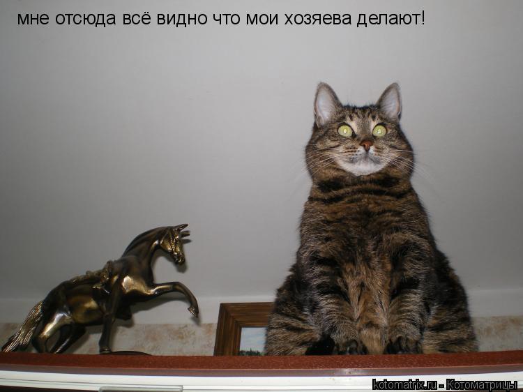 Котоматрица: мне отсюда всё видно что мои хозяева делают!