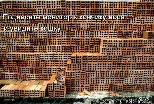 Котоматрица: Поднесите монитор к кончику носа  и увидите кошку