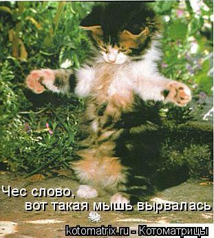Котоматрица: Чес слово, вот такая мышь вырвалась!