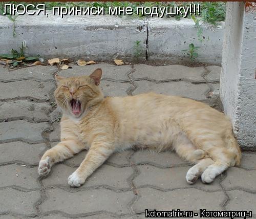 Котоматрица: ЛЮСЯ, приниси мне подушку!!!