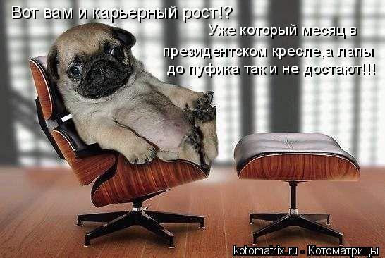 Котоматрица: Вот вам и карьерный рост!? Уже который месяц в  президентском кресле,а лапы до пуфика так и не достают!!!