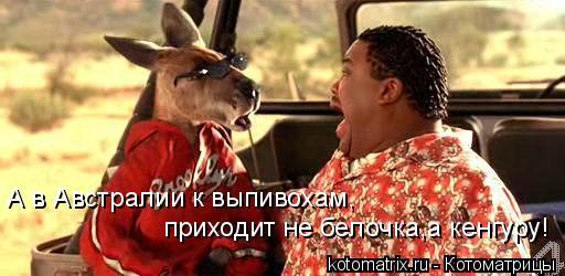 Котоматрица: А в Австралии к выпивохам, приходит не белочка,а кенгуру!
