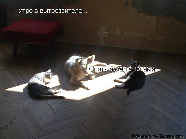Котоматрица: Утро в вытрезвителе... Опять бухал с котами.