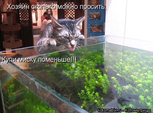 Котоматрица: Хозяин сколько можно просить, Купи миску поменьше!!!