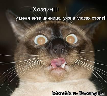 Котоматрица: - Хозяин!!!  у меня ента иичница, уже в глазах стоит!!!