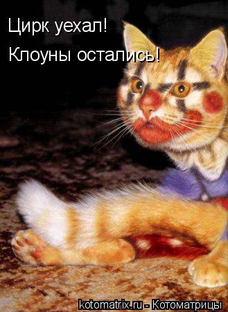 Котоматрица: Цирк уехал! Клоуны остались!