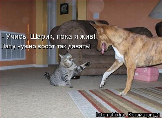 Котоматрица: - Учись, Шарик, пока я жив! Лапу нужно вооот так давать!