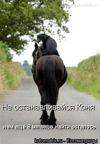 Котоматрица: нам ещё 8 мячиков найти осталось Не останавливайся Коня