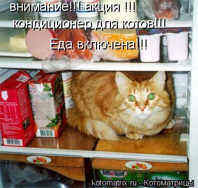 Котоматрица: внимание!!! акция !!!  кондиционер для котов!!! Еда включена!!!