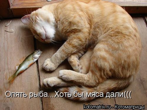 Котоматрица: Опять рыба...Хоть бы мяса дали(((