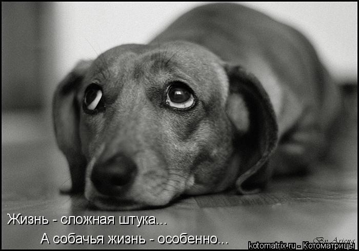 Котоматрица: Жизнь - сложная штука... А собачья жизнь - особенно...