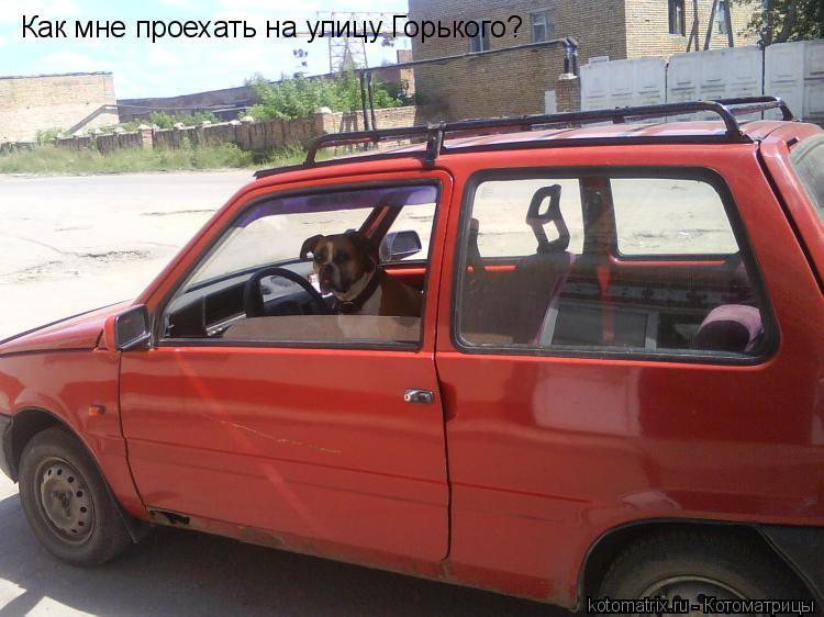 Котоматрица: Как мне проехать на улицу Горького?