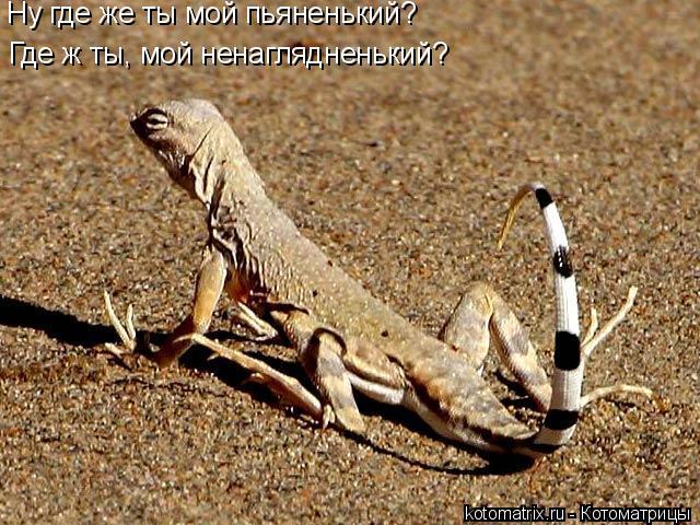 Котоматрица: Ну где же ты мой пьяненький?  Где ж ты, мой ненаглядненький?