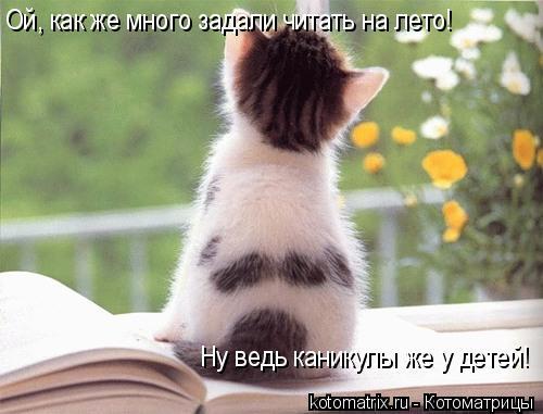 Котоматрица: Ой, как же много задали читать на лето! Ну ведь каникулы же у детей!