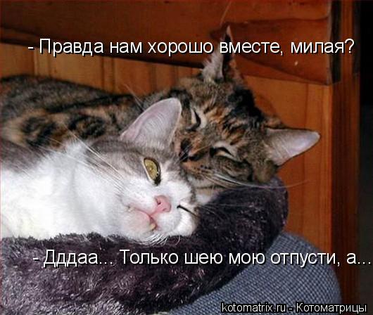 Котоматрица: - Правда нам хорошо вместе, милая? - Дддаа... Только шею мою отпусти, а...