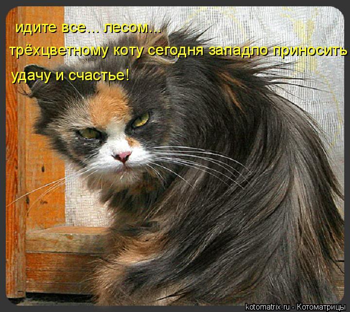Котоматрица: идите все... лесом... трёхцветному коту сегодня западло приносить  удачу и счастье!