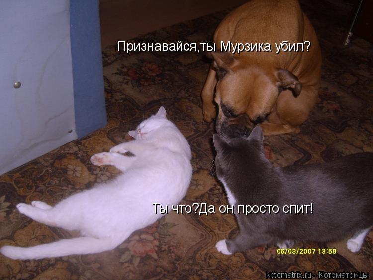 Котоматрица: Признавайся,ты Мурзика убил? Ты что?Да он просто спит!
