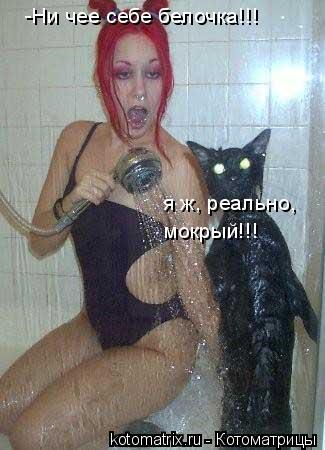 Котоматрица: -Ни чее себе белочка!!! я ж, реально, мокрый!!!