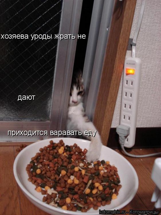 Котоматрица: хозяева уроды жрать не  дают приходится варавать еду