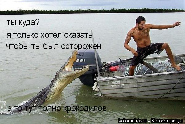 Котоматрица: ты куда? я только хотел сказать чтобы ты был осторожен а то тут полно крокодилов