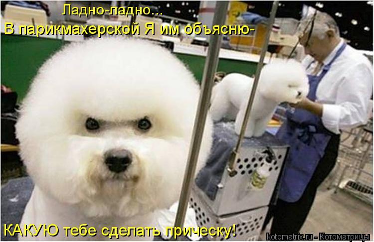 Котоматрица: КАКУЮ тебе сделать прическу! В парикмахерской Я им объясню- Ладно-ладно...