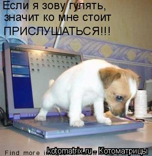 Котоматрица: Если я зову гулять, значит ко мне стоит  ПРИСЛУШАТЬСЯ!!!