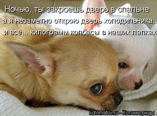 Котоматрица: Ночью, ты закроешь дверь в спальне а я незаметно открою дверь холодильника... и всё... килограмм колбасы в наших лапках