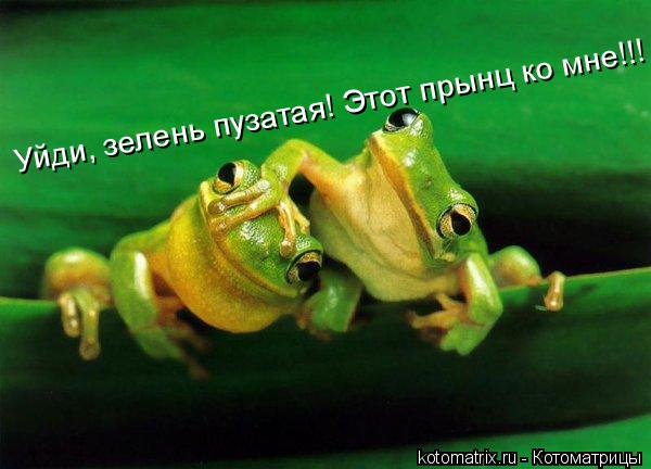 Котоматрица: Уйди, зелень пузатая! Этот прынц ко мне!!!