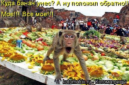 Котоматрица: Куда банан унес? А ну положил обратно!!! Мое!!! Все мое!!!