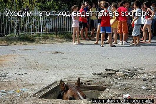Котоматрица: Уходим...это т ход ведет тоже в зоопарк...