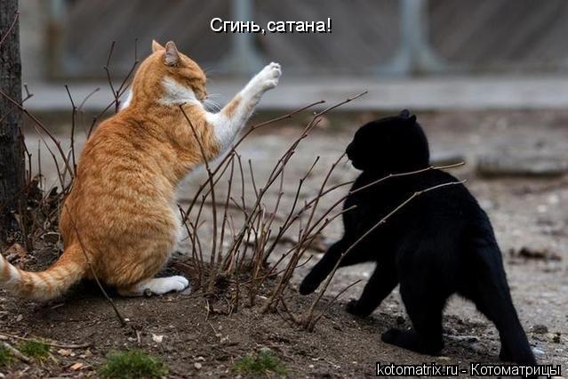 кот буран фото