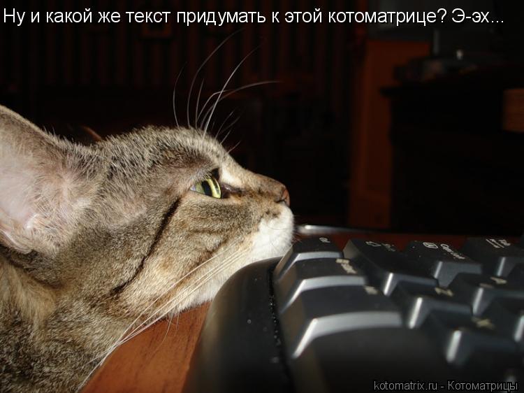Котоматрица: Ну и какой же текст придумать к этой котоматрице? Э-эх...