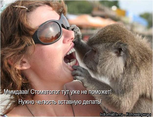 Котоматрица: Мммдааа! Стоматолог тут уже не поможет! Нужно челюсть вставную делать!