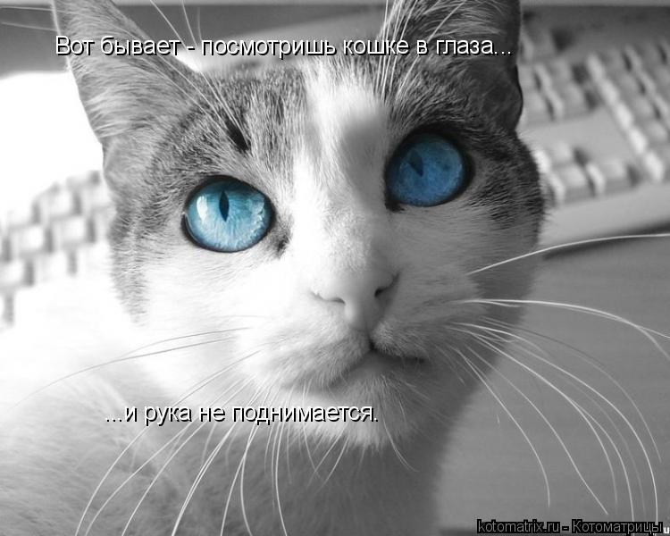 Котоматрица: Вот бывает - посмотришь кошке в глаза... ...и рука не поднимается.