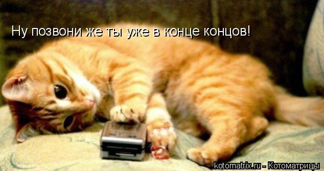 Котоматрица: Ну позвони же ты уже в конце концов!