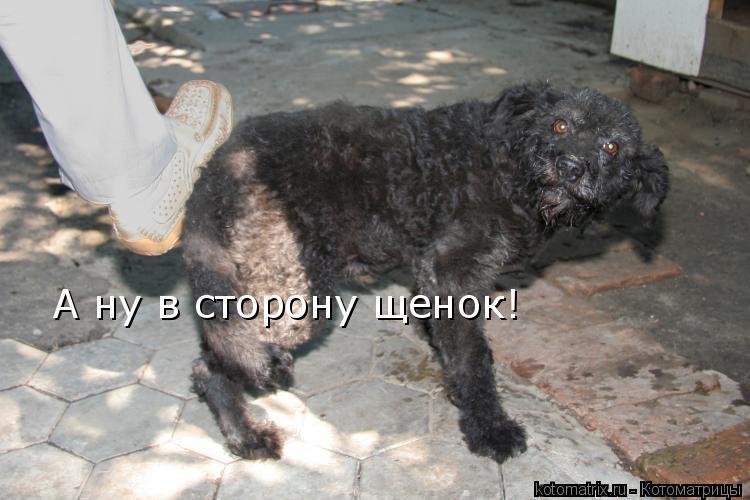Котоматрица: А ну в сторону щенок!