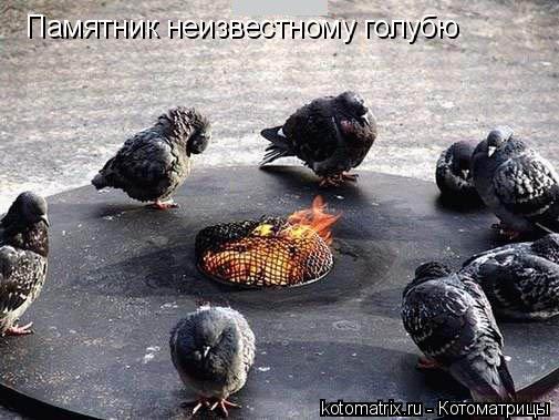 Котоматрица: Памятник неизвестному голубю