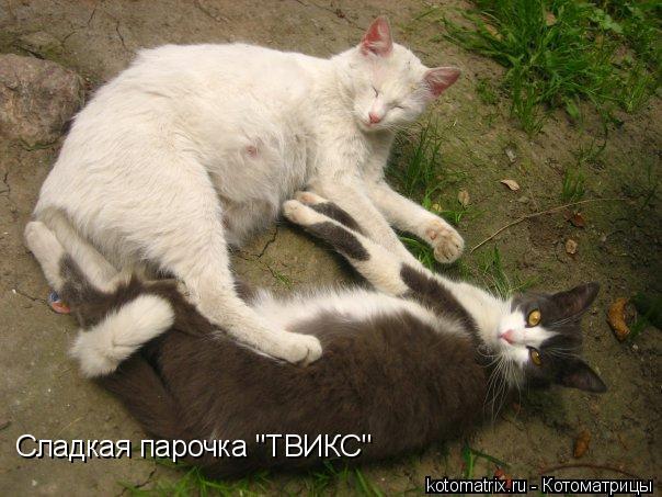 """Котоматрица: Сладкая парочка """"ТВИКС"""""""