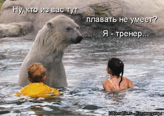 Котоматрица: Ну, кто из вас тут плавать не умеет? Я - тренер...