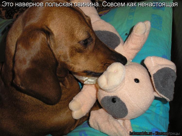 Котоматрица: Это наверное польская свинина. Совсем как ненастоящая