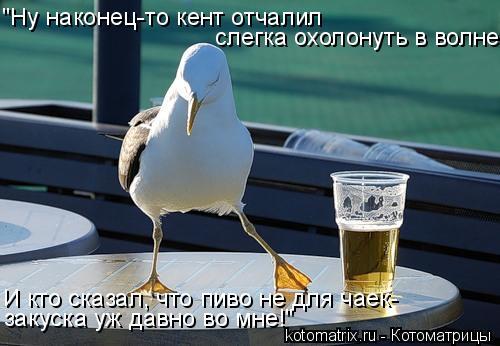 """Котоматрица: """"Ну наконец-то кент отчалил слегка охолонуть в волне... И кто сказал, что пиво не для чаек- закуска уж давно во мне!"""""""