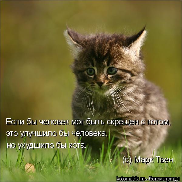 Котоматрица: Если бы человек мог быть скрещен с котом, это улучшило бы человека, но ухудшило бы кота. (с) Марк Твeн