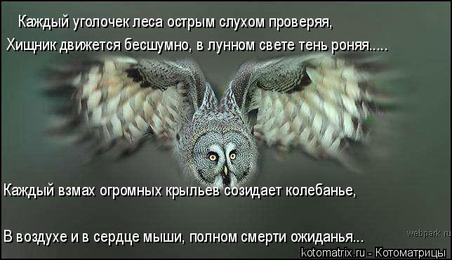 Котоматрица: Каждый уголочек леса острым слухом проверяя, Хищник движется бесшумно, в лунном свете тень роняя..... Каждый взмах огромных крыльев созидает