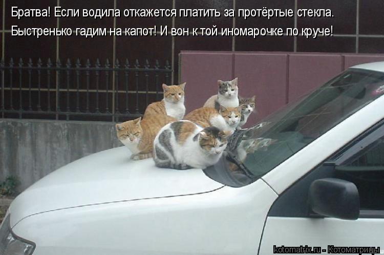 Котоматрица: Братва! Если водила откажется платить за протёртые стекла. Быстренько гадим на капот! И вон к той иномарочке по круче!